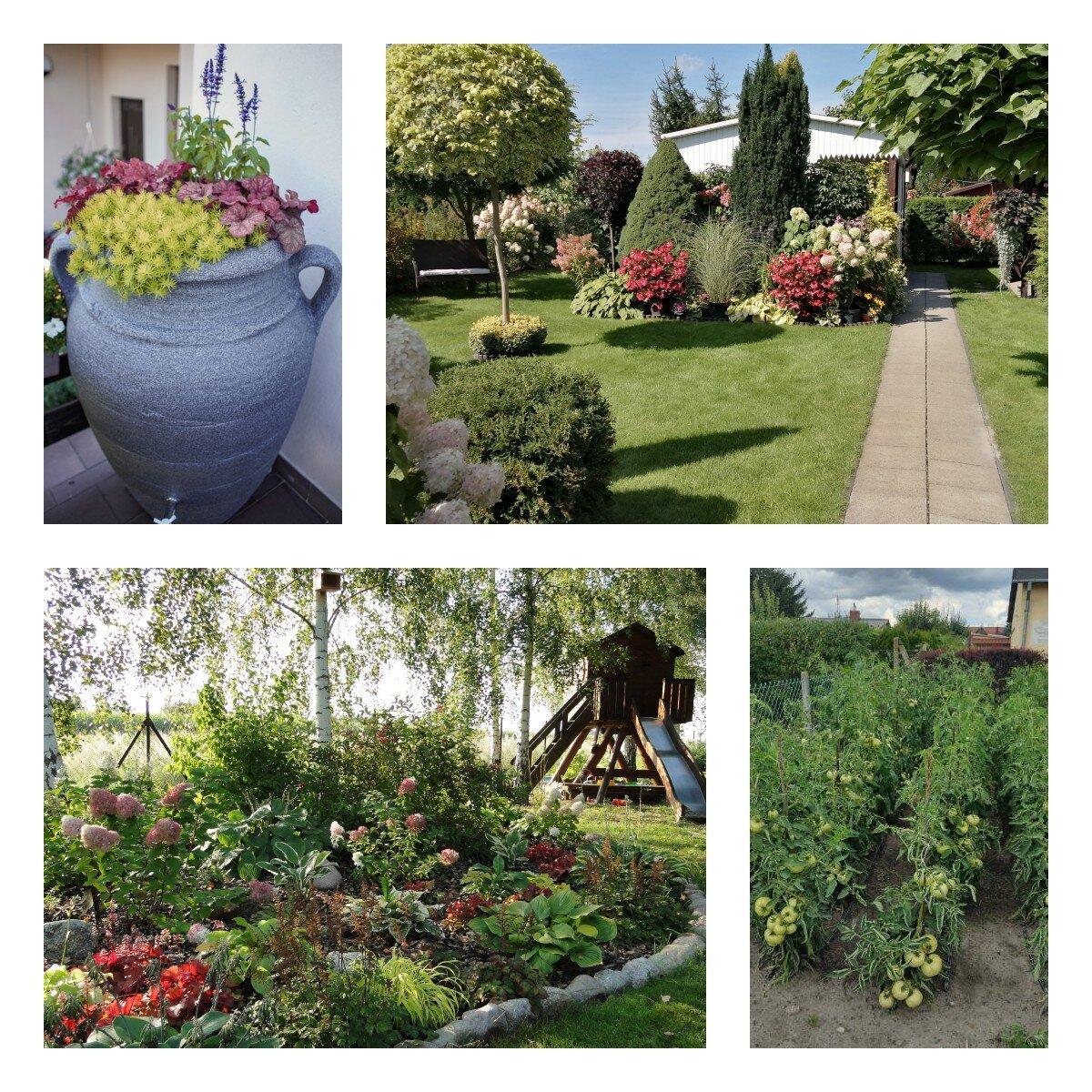 Na zdjęciu działki z krzewami skoszona trawa, na jednym zdjęciu donica amfora z wstawionymi kwiatami, na drugim pomidory z nawadnianem kropelkowym, na kolejnych dwóch działka z trawą i krzewami